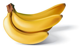 Gruppo delle banane Immagine Stock