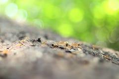 Gruppo delle formiche lavoro, lavoro di squadra Fotografie Stock Libere da Diritti