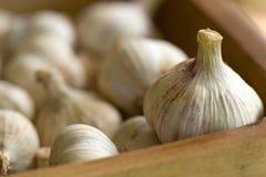 Gruppo di aglio in una casella Fotografie Stock