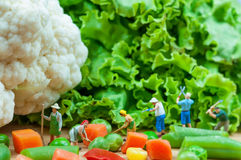 Gruppo di agricoltori raccogliendo le verdure Fotografia Stock