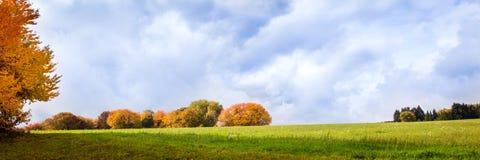 Gruppo di alberi alla stagione di autunno Immagine Stock