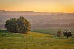 Gruppo di alberi con il prato verde nel tramonto, paesaggio ceco immagini stock libere da diritti