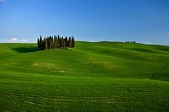 Gruppo di alberi di cipresso in Toscana Fotografia Stock Libera da Diritti