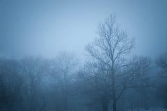 Gruppo di alberi nella nebbia Immagini Stock Libere da Diritti
