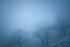 Gruppo di alberi nella nebbia Immagine Stock Libera da Diritti