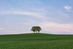 Gruppo di alberi su una collina Fotografie Stock Libere da Diritti