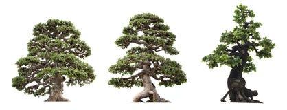 gruppo di albero isolato su fondo bianco Immagine Stock Libera da Diritti