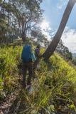 Gruppo di alpinista che cammina sulla foresta profonda Fotografie Stock Libere da Diritti