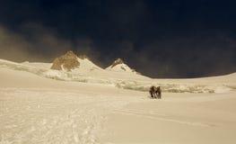 Gruppo di alpinisti su un ghiacciaio Fotografia Stock Libera da Diritti