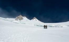 Gruppo di alpinisti su un ghiacciaio Immagine Stock Libera da Diritti