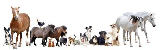 Gruppo di animali Fotografia Stock Libera da Diritti