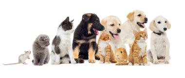 Gruppo di animali domestici Fotografie Stock Libere da Diritti