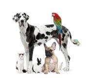 Gruppo di animali domestici - cane, gatto, uccello, rettile, coniglio Immagine Stock