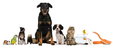 Gruppo di animali domestici che si siedono davanti alla priorità bassa bianca Fotografia Stock