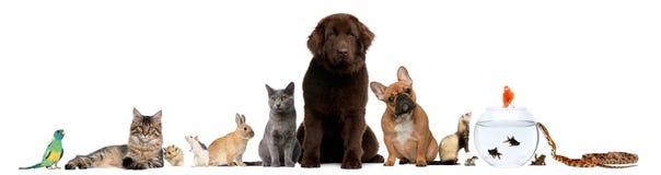 Gruppo di animali domestici che si siedono davanti alla priorità bassa bianca Fotografia Stock Libera da Diritti