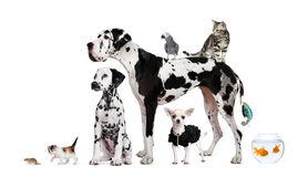 Gruppo di animali domestici davanti a priorità bassa bianca Fotografie Stock Libere da Diritti