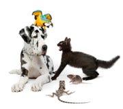 Gruppo di animali domestici davanti a priorità bassa bianca Fotografie Stock
