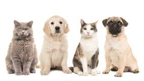 Gruppo di animali domestici, di cuccioli di cane e di gatti adulti Immagine Stock