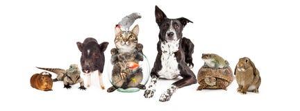 Gruppo di animali domestici domestici che si siedono insieme Fotografia Stock Libera da Diritti