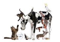 Gruppo di animali domestici insieme Immagini Stock Libere da Diritti