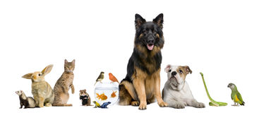 Gruppo di animali domestici insieme immagine stock libera da diritti