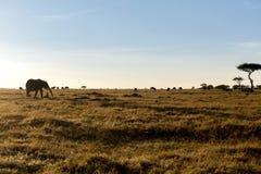 Gruppo di animali erbivori in savana all'Africa Immagine Stock