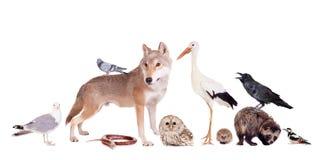 Gruppo di animali euroasiatici Immagine Stock