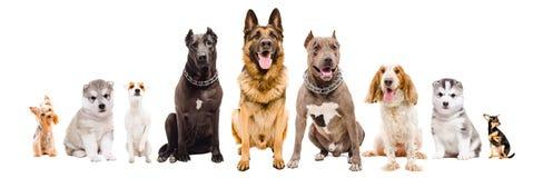 Gruppo di cani delle razze differenti che si siedono insieme immagine stock
