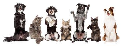 Gruppo di cani e di gatti che elemosinano insieme Immagine Stock