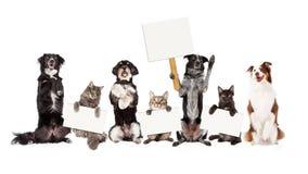 Gruppo di cani e di gatti che si siedono sulla tenuta dei segni in bianco Fotografia Stock