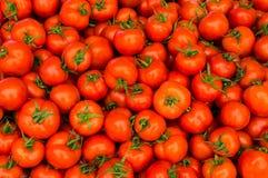 Gruppo di carta da parati rossa dei pomodori Fotografie Stock