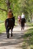 Gruppo di cavalieri del cavallo della donna nella foresta il giorno soleggiato Fotografie Stock Libere da Diritti