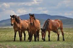 Gruppo di cavalli su un pascolo Immagini Stock