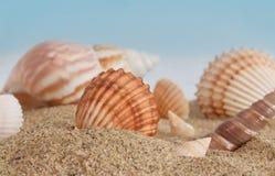 Gruppo di conchiglie in sabbia Fotografia Stock