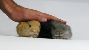 Gruppo di conigli in studio archivi video