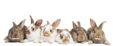 Gruppo di conigli in una riga Fotografia Stock Libera da Diritti