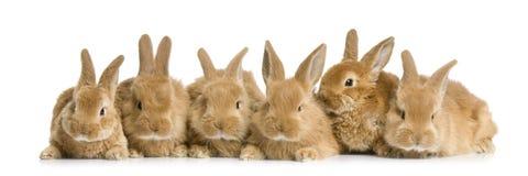 Gruppo di coniglietti Fotografie Stock Libere da Diritti