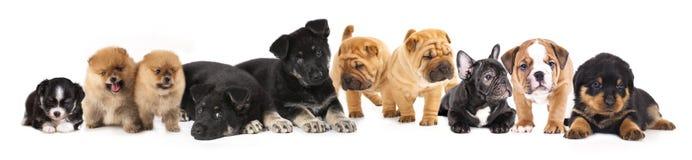 Gruppo di cuccioli fotografia stock libera da diritti