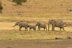 Gruppo di elefanti Fotografia Stock