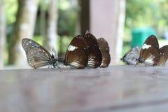 Gruppo di farfalle marroni sulla tavola immagine stock libera da diritti