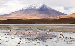 Gruppo di fenicotteri ad un lago di sale di altiplano & ad un x28; Bolivia& x29; Immagine Stock