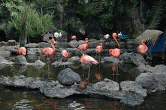Gruppo di fenicottero rosa nello stagno fotografia stock