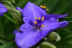 Gruppo di fiore porpora fresco in una fine verde di atmosfera su immagine stock libera da diritti