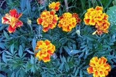 Gruppo di fiori Immagini Stock