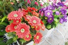 Gruppo di fiori artificiali rossi e viola Fotografie Stock