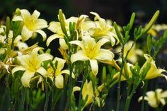 Gruppo di flora gialla Immagine Stock Libera da Diritti
