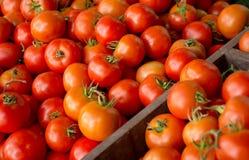 Gruppo di fondo rosso dei pomodori nell'azienda agricola di agricoltura del mercato del villaggio del vassoio in pieno di organic Immagine Stock