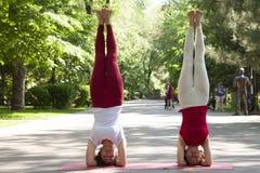 Gruppo di forma fisica che fa yoga nell'albero di posa del parco workout fotografie stock libere da diritti