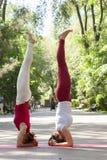 Gruppo di forma fisica che fa yoga nell'albero di posa del parco workout immagine stock libera da diritti