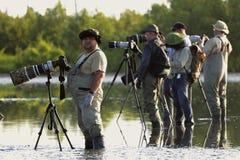 Gruppo di fotografi in acqua. Fotografie Stock Libere da Diritti